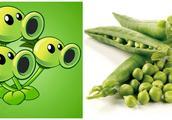 哇,植物大战僵尸里的豌豆射手是这个样子的,太神奇了
