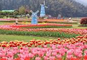 在南昌的人有福了,九龙溪花展嗨爆春天!好玩到不想回家!