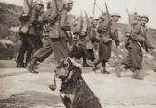 真实瞩目,这场战争比二战还惨烈,老照片为你全景展现一战场景