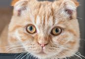 布偶猫、折耳猫、无毛猫等几种性情温顺的猫咪,你最喜欢哪种呢