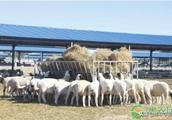 羊肉多少钱一斤?2018年12月份全国各地羊肉价格汇总