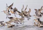 见过那么多鸟,别说你还不知道鸟类怎么分类