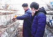 兔子胆子小,养殖户不建议发快递,一起来看看有什么解决方法
