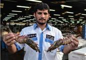 迪拜那么有钱,当地的菜市场是什么样的?驴友:还有鲨鱼?