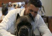 罗威纳犬vs卡斯罗犬,终极对决