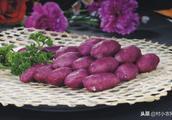 紫薯,长的不好,产量低、又不好吃,你说气人不!如何科学栽培?