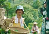 湄公河行动:好好的地方这人都是断手断脚,竟然是因为不肯种罂粟