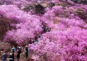 芳菲人间四月天,东风吹来满眼春