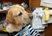 宠物店长是狗狗,拉布拉多觉得生意不好,趴在一旁愁眉苦脸