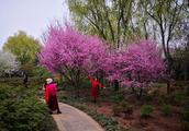 姹紫嫣红、百花争艳,隋唐城遗址的春天让人流连忘返