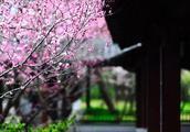 李煜:看一场春花秋月,走一遭人生明灭丨江湖诗话No.15