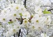 春天就来黄山区看海