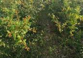 云南善馨农业集团带动农民增收致富奔小康