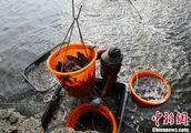 谁把台湾农产品卖到大陆?蔡英文、韩国瑜吵翻天
