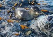 欧盟2021年后禁用一次性塑料制品