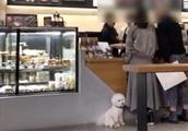 """顾客带宠物狗进咖啡店与员工起争执?指责店员""""歧视狗狗"""""""
