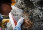 考古人员在庞贝古城发现珍贵壁画 来自于古希腊神话故事