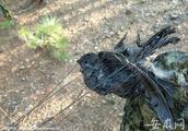安徽重拳出击保护野生动物 随意放生造成损害需担责