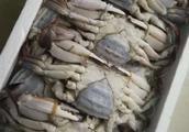 济南出现新骗局,买来冷冻海鲜都是空壳