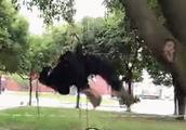 """成都大学开了门""""爬树课""""!网友:因为要上树收熊猫!"""