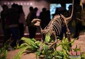 探访四川自贡恐龙博物馆