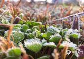 寒潮预警连发8天,广西、四川、安徽等多地作物出现冻害,作物越冬有何法宝?