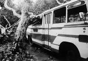 「口述西湖历史」救活每一棵树!
