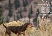 《一条狗的回家路》北美口碑持续走高国内预售现已开启 人狗羁绊尽显情深意长