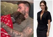 贝克汉姆爱犬盖4万元毛毯引热议 比王思聪家的狗还土豪呀