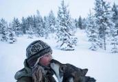 芬兰女子的北极遁世生活:与85只哈士奇相依相伴