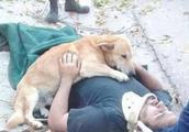 男主人不慎跌落失去知觉,小狗默默守护在身边,画面让人感动!