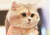 """吸猫遛狗风行互联网催热""""宠物经济"""""""