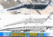 发现远古鸭嘴兽龙怎么回事?在哪里发现远古鸭嘴兽龙的长什么样