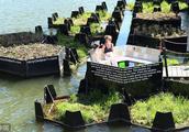 垃圾分类⑦荷兰|婴儿车用废弃塑料制成,业内人士:通过欧洲质检标准