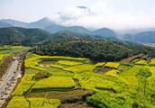 达人分享 | 三清山油菜花组图,三清山乡村旅游也有看点!【附攻略】