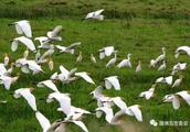 """涠洲岛启动""""爱鸟周""""活动,让更多野生动植物在海岛安家落户!"""