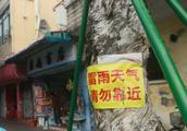 莞城万寿路多株老树空心根部腐烂,隐患多需更换,街坊担心又不舍