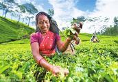 东南亚国家农业的投资机遇在哪?