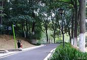 北京飞絮时间表出炉,树木不同飞絮时间不同!
