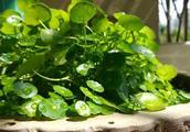 几种养护超喜水的植物,再不用担心涝死!