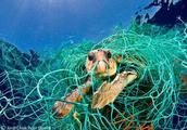 7年致力于海洋垃圾清理,这个少年希望消灭全球塑料垃圾!