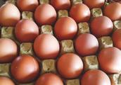 蛋鸡总是开产期迟产蛋少,是什么原因?