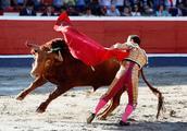 为何斗牛场上的公牛会被红布激怒?看完解开了多年疑惑