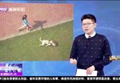 云南文山:7点至22点禁止遛狗!养狗网友:难道让我通宵遛狗?