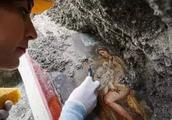 庞贝古城又有新发现!罕见古希腊壁画重见天日