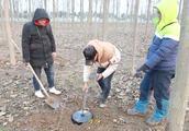用金属探测器在小树林探宝,结果探出来的东西,把小伙恶心坏了