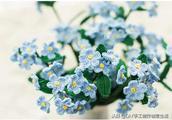 钩编花卉之勿忘我,代表着永恒的心,不变的爱,有详细