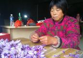 农村有种亩赚5万元的作物,有钱人才能玩得转,近两年炒得火热