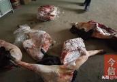 因非法狩猎野猪4头 信阳新县两村民被刑拘