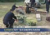 株洲市一批非法捕获野生鸟类获救